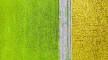 vue aérienne de dessus du champ de riz vert et jaune d'en haut photo