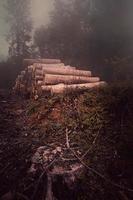 arbres dans la forêt en automne photo