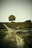 arbre dans le fond de paysage naturel photo