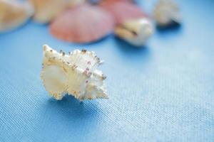 composition de coquillages exotiques de différentes formes sur une vue de dessus de fond bleu photo