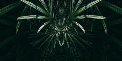 feuille verte tropicale dans des tons sombres. photo