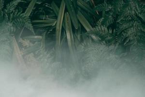 jardin vertical avec feuille verte tropicale avec brouillard et pluie, ton sombre photo