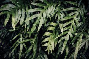 fond de feuille verte tropicale, thème de ton sombre. photo
