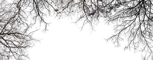 arbre isolé sur fond blanc photo