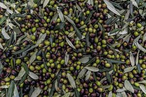 texture d'olive fraîchement récoltée photo