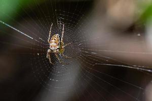 araignée et sa toile d'araignée photo