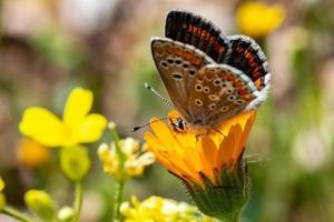 la macro papillon photo