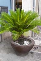 petit palmier sur un vase comme présentoir photo