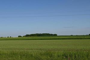 un champ vert et un groupe d'arbres au loin photo