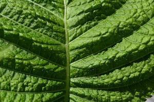 structure de feuille verte photo