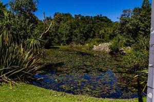Dommages causés à l'étang de canard de Western Springs après une tempête, Auckland, Nouvelle-Zélande photo