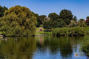 canards, oiseaux, cygnes et oies s'ébattent dans et autour de l'étang. étang de canard de source occidentale, auckland, nouvelle-zélande photo