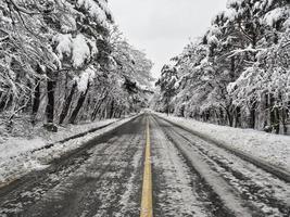 route forestière enneigée dans les montagnes. parc national de seoraksan. Corée du Sud photo