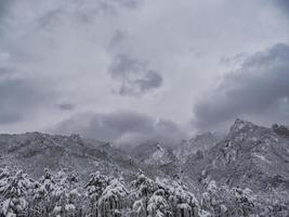 forêt de pins sous la neige et de grandes montagnes en arrière-plan. parc national de seoraksan, corée du sud. hiver 2018 photo