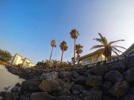 hauts palmiers à la plage de la ville de pyoseon sur l'île de jeju, corée du sud photo