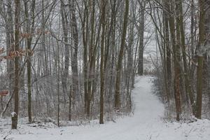 paysage de forêt d'hiver photo