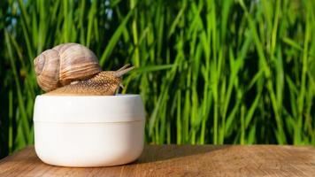 escargot sur un pot de crème avec de la mucine dans l'espace de copie du jardin d'été, soins de la peau de beauté photo