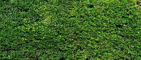 bannière photo de mur végétal vert de la maison