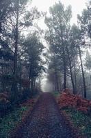 route avec des arbres rouges dans la montagne photo