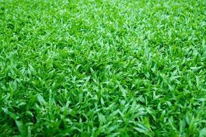 fond d'herbe verte, terrain de football photo