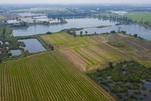 vue aérienne du drone volant du riz des champs avec fond de nature paysage vert, vue de dessus du riz des champs photo