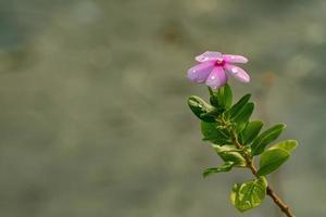 beau fond de fleurs, nature colorée photo