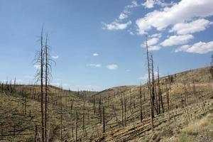 Les jeunes arbres récupérant la zone d'incendie de forêt dans la forêt nationale de Gila photo
