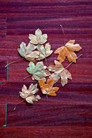 feuille d'arbre jaune en saison d'automne photo