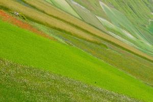 castelluccio di norcia et sa nature fleurie photo
