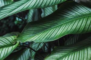 fond de feuilles dans la forêt à feuilles persistantes photo
