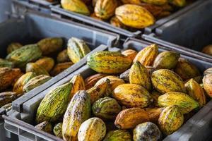 cacao et cabosses en caisses à vendre photo