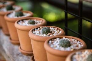 expérience de culture de cactus à la ferme. photo