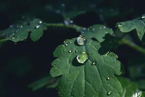feuille verte avec des gouttes de pluie sur fond noir foncé photo