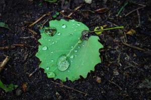 feuille verte avec des gouttes de pluie sur la terre sombre de la forêt noire photo