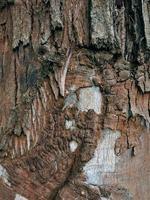 abstrait texturé en bois photo