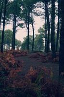 arbres dans la forêt dans la nature en automne photo