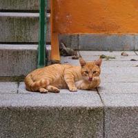 beau portrait de chat errant brun dans la rue photo