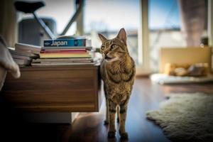 photo d'un chat de la savane