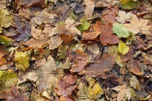 feuilles d'automne de la forêt photo