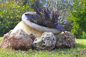 la plante dans un vase ancien photo
