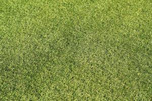 prairie verte utilisée comme papier peint photo