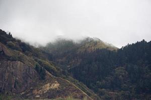 arbres dans le paysage naturel de montagne à bilbao en espagne photo