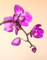 orchidée rose sur fond jaune clair photo
