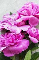 Fleurs de pivoine sur fond de béton gris photo