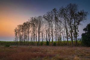 silhouette d'une rangée d'arbres au coucher du soleil à la campagne photo