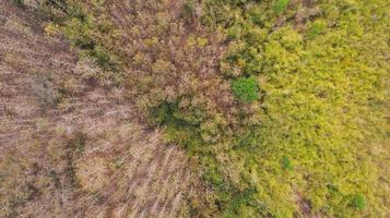 forêt vue de dessus aérienne, fond de parc naturel photo