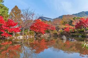parc maruyama à kyoto, japon en automne photo
