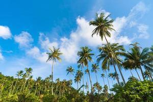 beau cocotier sous ciel bleu sur la plage tropicale et la mer photo