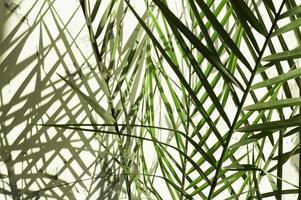 plante verte à la maison sous la lumière du soleil du matin avec une ombre sombre sur le mur photo