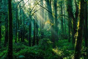 rayons de soleil dans la forêt de la montagne ali, taiwan photo